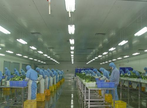 食品生产车间布局标准-墙壁