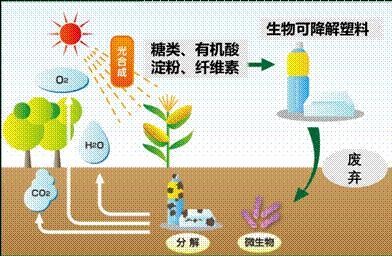 生物可降解塑料