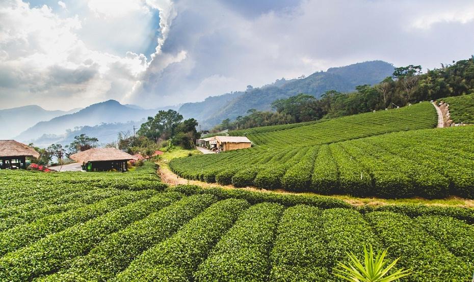 台湾农业考察