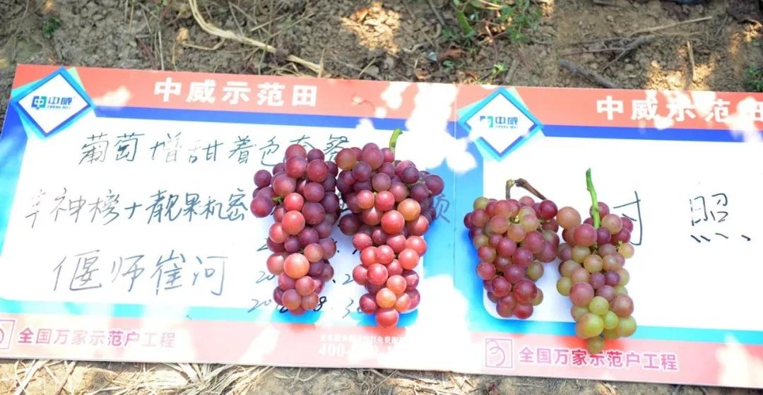 中威靓果机密增红转色膨果用400-779-1088