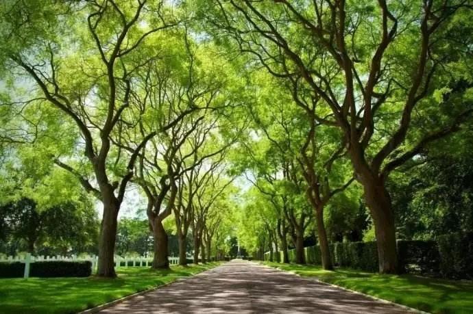 中威快活林大树移栽生根剂400-779-1088