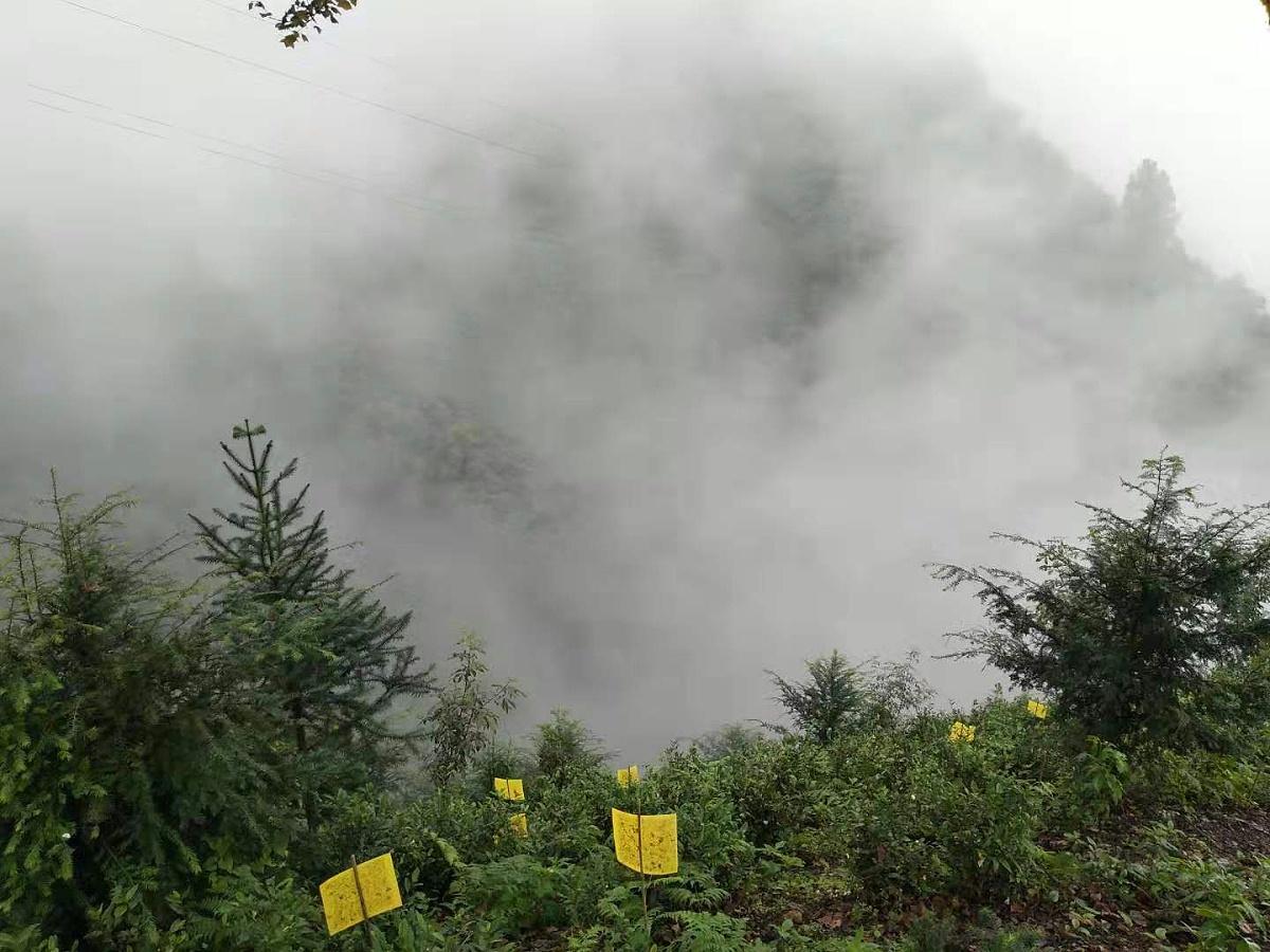 云雾茶种植基地-环境决定品质 一个好茶园应该是这样【鸦鹊山】