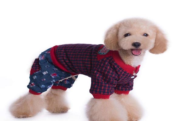 哪里有狗衣服批发