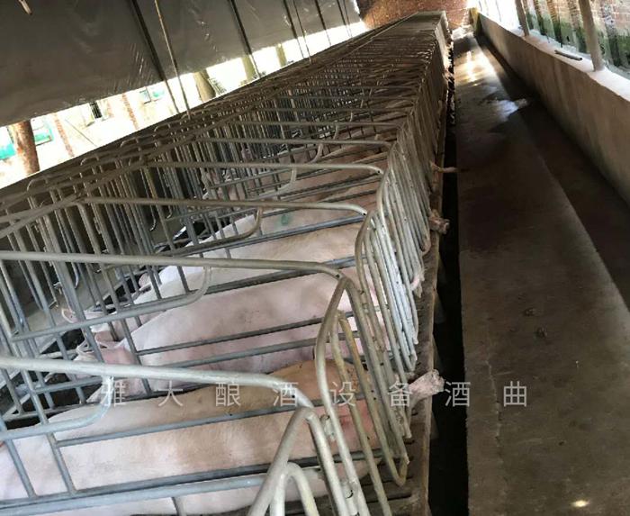 刘总以前的养猪场