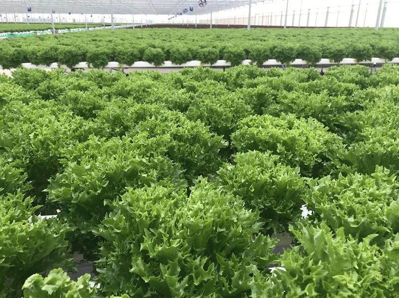 无土栽培设备 蔬乐管水培管道