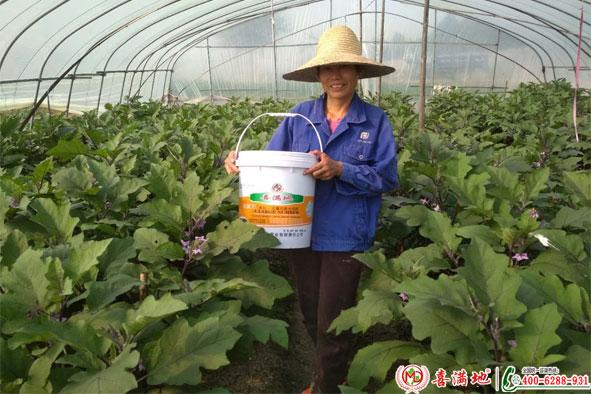 茄子使用喜满地水溶肥效果