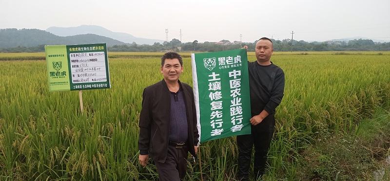 水稻种植 观摩会