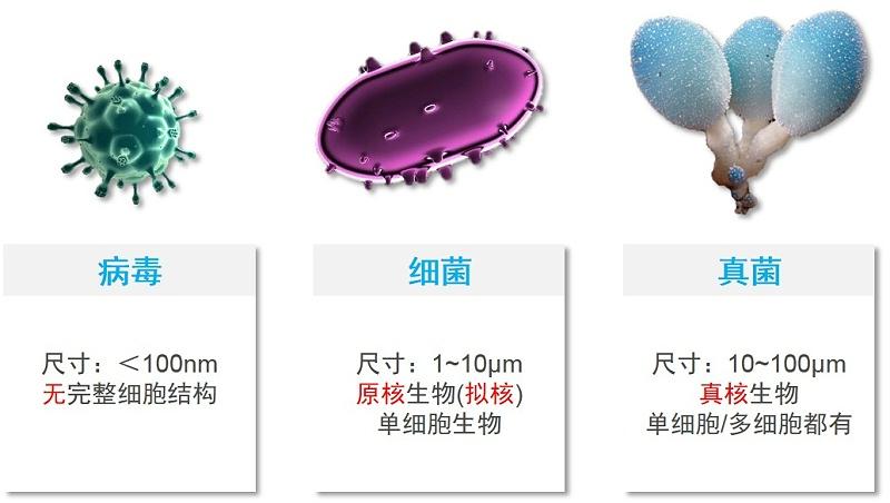 微生物对比