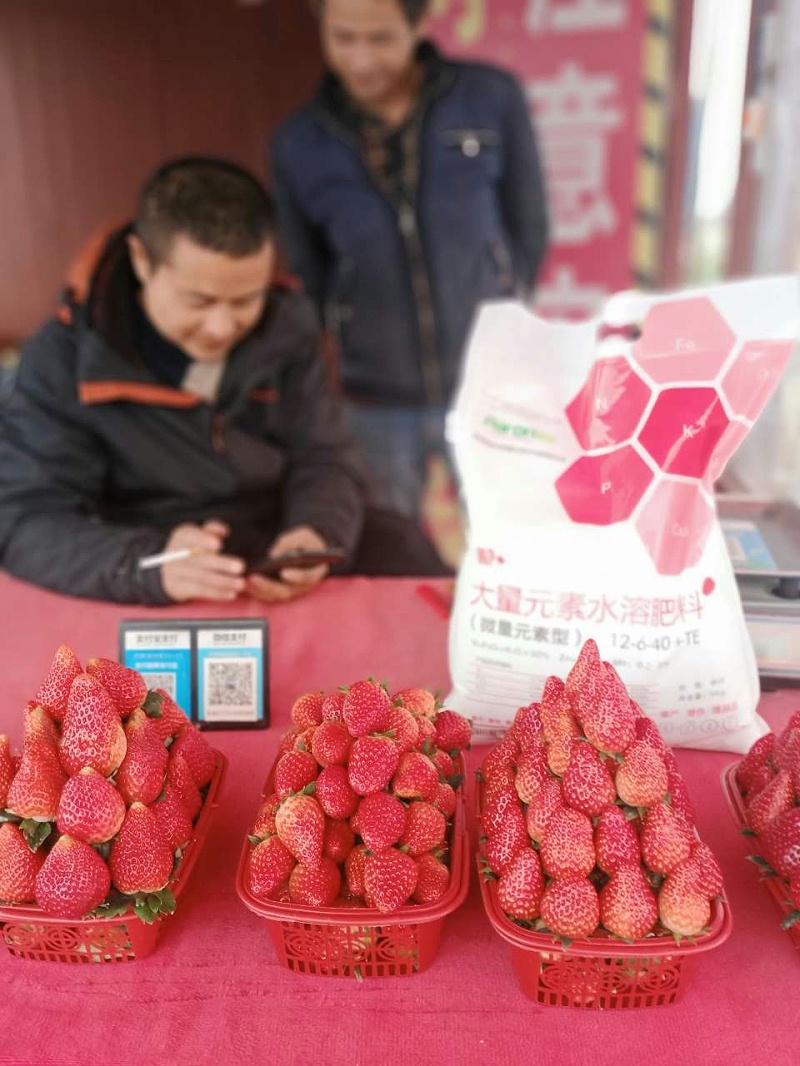 草莓专用水溶肥料