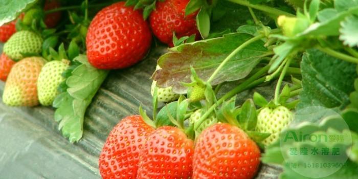 草莓专用水溶肥价格