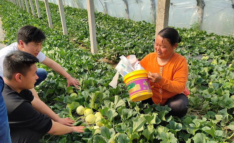 四川爱隆甜瓜种植基地